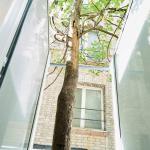 cy-passy-arbre